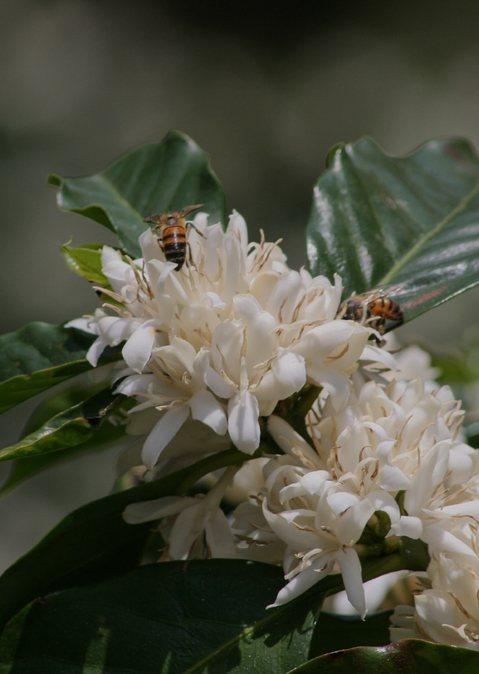 Bienen bei Maria Botto